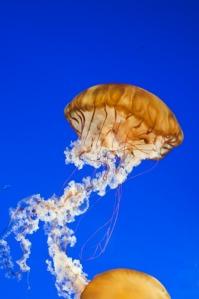 vancouver-aquarium-1356485_960_720